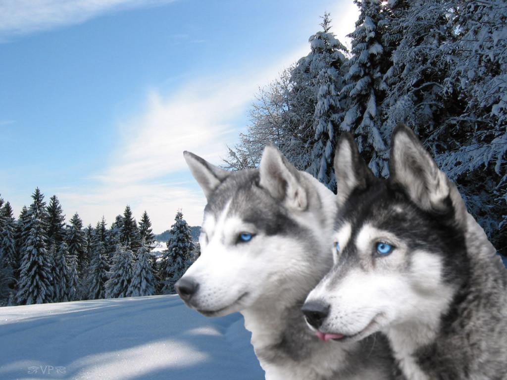 http://wanderrersoft.narod.ru/animals_42.jpg
